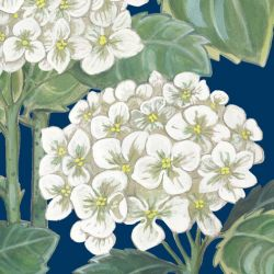 secret garden hydrangea allover navy