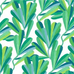 coastal banksia leaves coastal