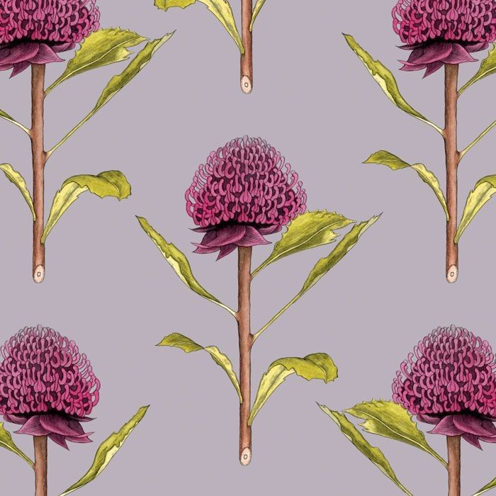 native waltz botanicalwaratah purpletop