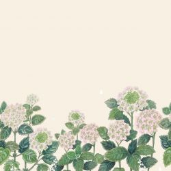 secret garden hydrangea border pink cream