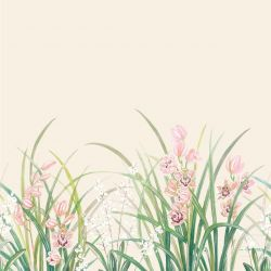 secret garden orchid border pink cream