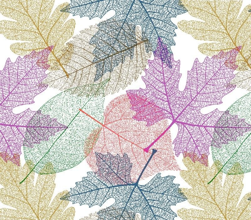 mixed bunch leaf venation