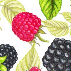 fruit veg berry leaf