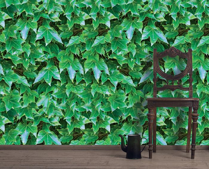 green walls ivy cover